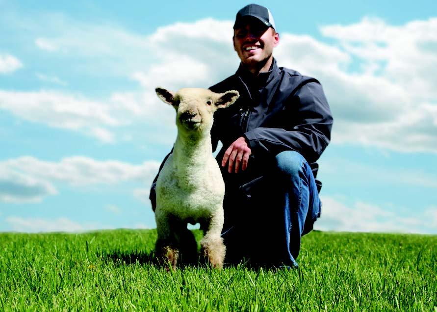sheep clone